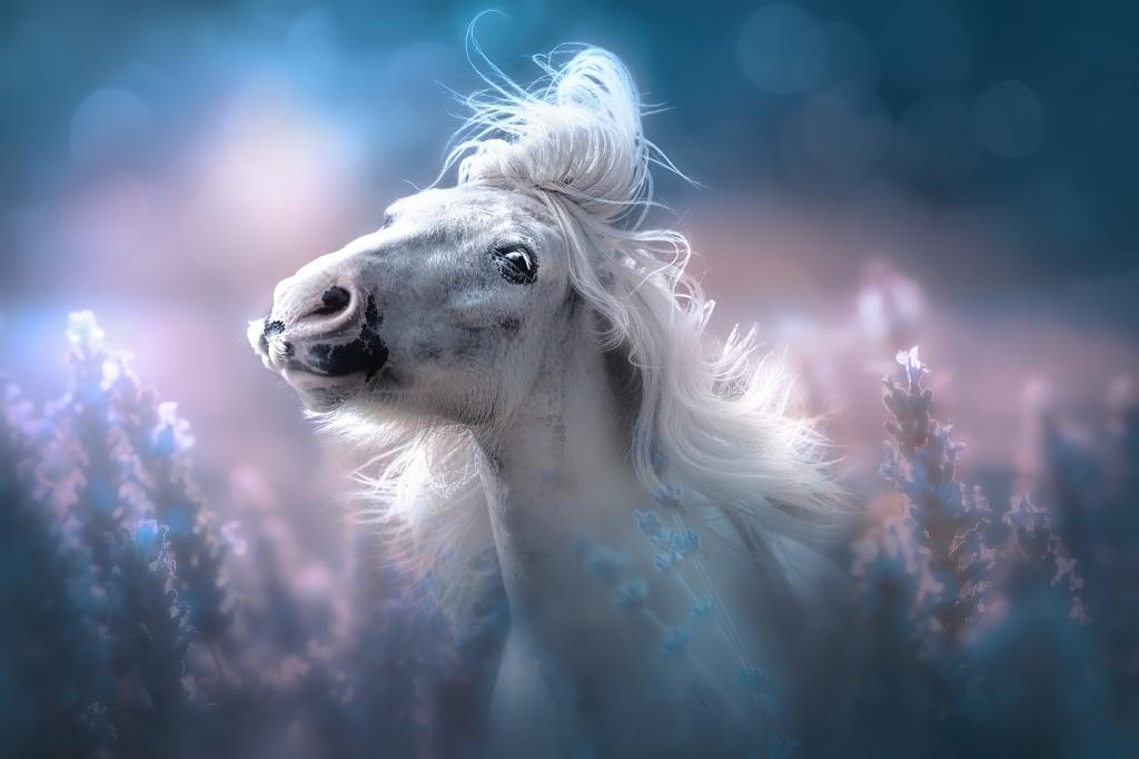Equine Fine Art photography Jenny Cameron